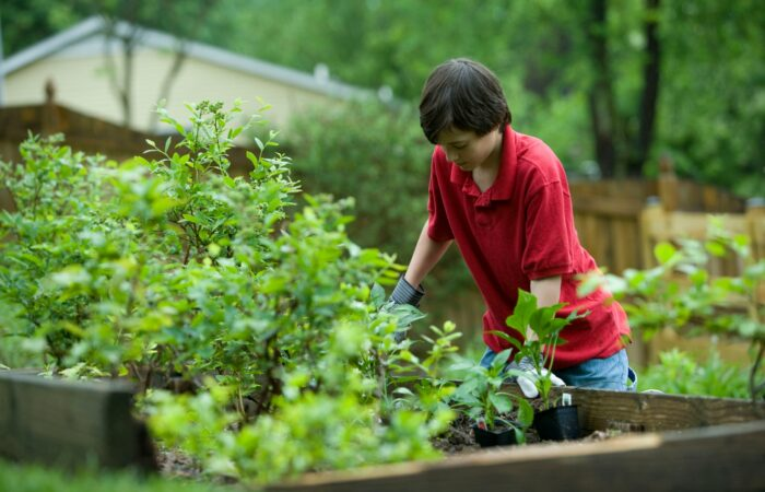 A teenage boy planting plants in a garden