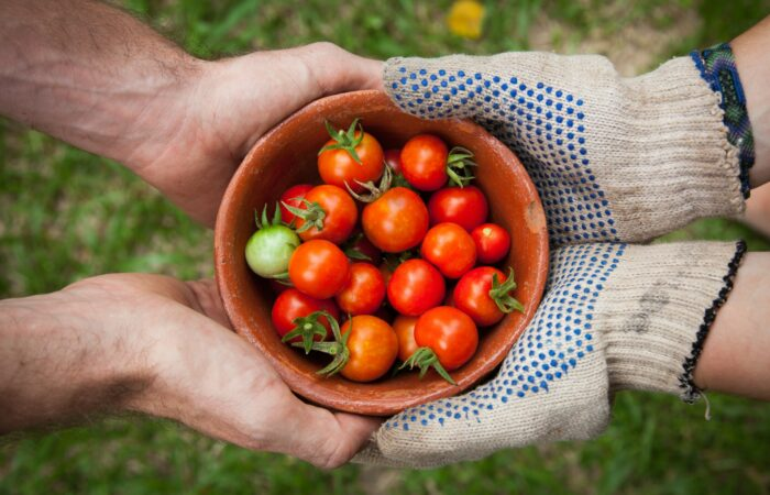 Someone with gardening gloves handing a bowl of cherry tomatoes to someone else